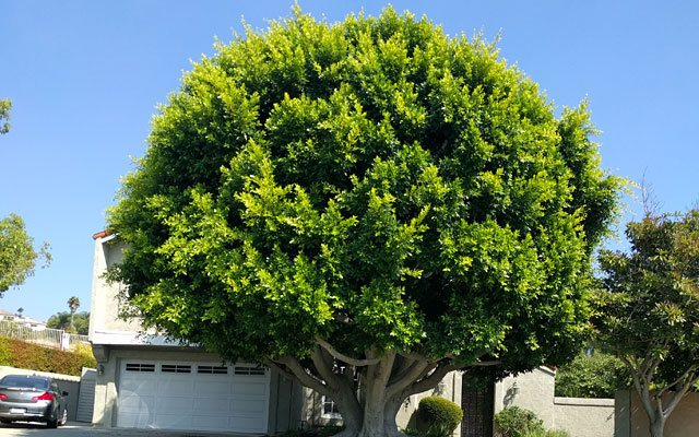 San Clemente Tree Care Specialist