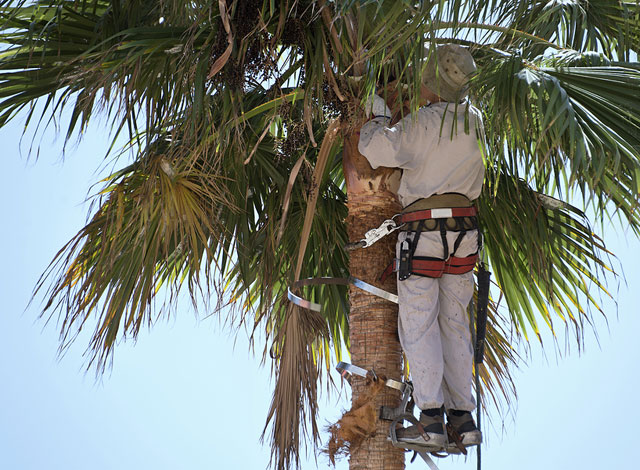 92672, 92673 Tree Care Services